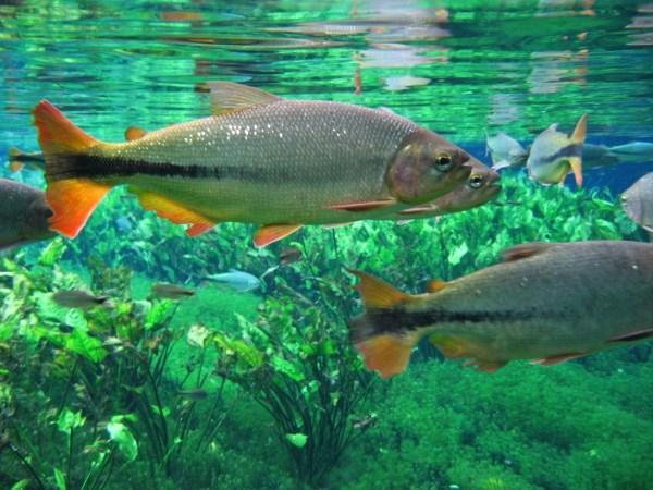 Peixes do rio.