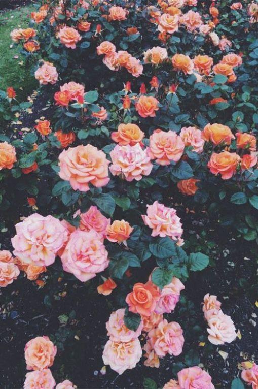 rosas de diversas cores
