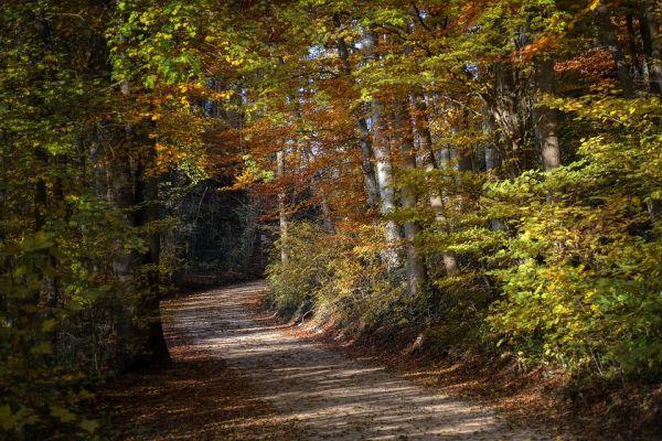 Imagem com paisagem da floresta