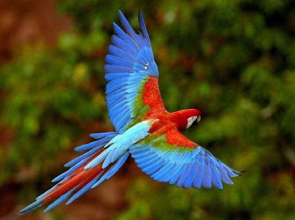 pássaro colorido voando