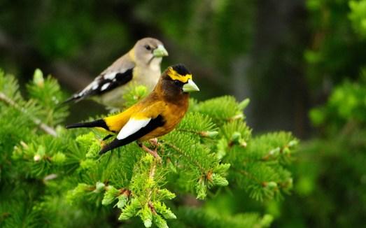 pássaro nos galhos das árvores