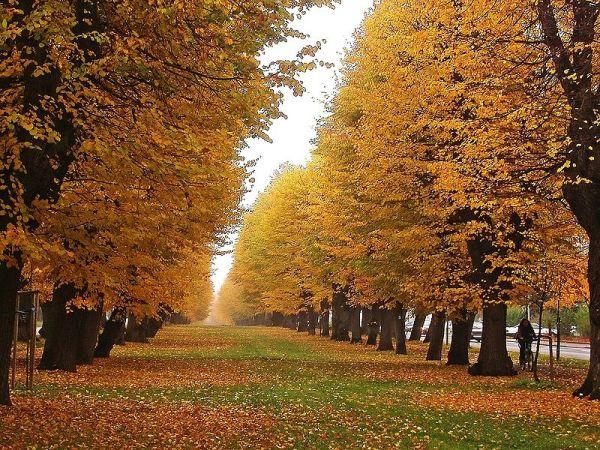 Belíssima imagem dessa estação de outono.