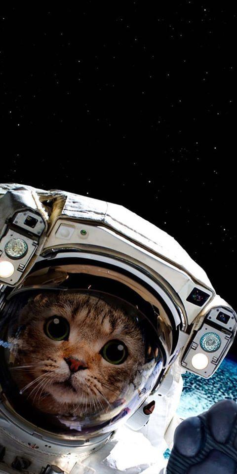 Papel de parede gato astronauta