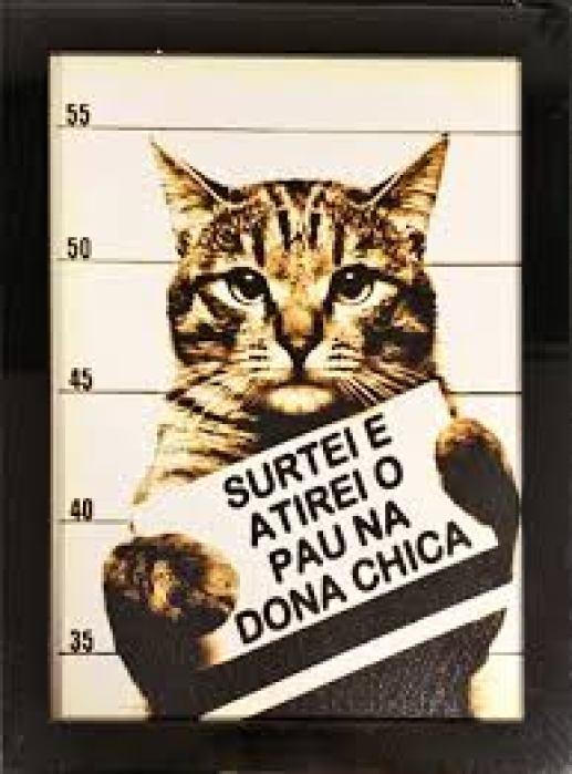 gato da frase engraçada