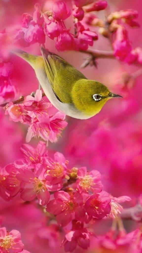 incrível pássaro de papel parede