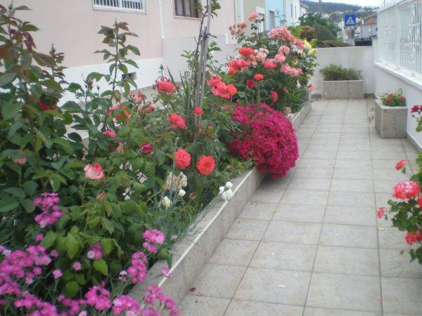 simples jardins floridos