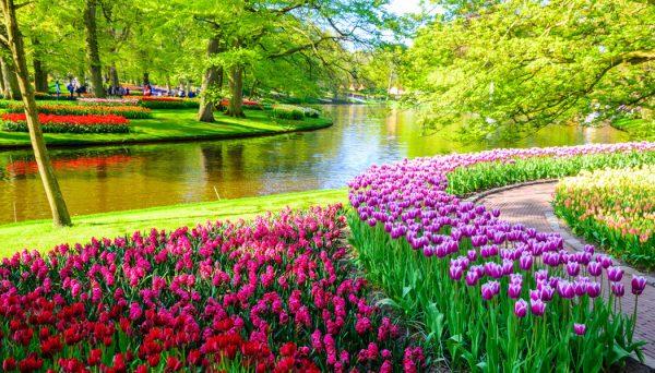 jardins floridos inacreditável