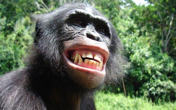 macaco a sorrir