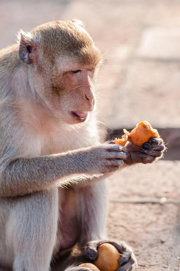 Foto macaco comendo laranja.