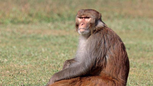 Macaco só observando.