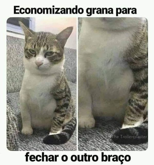 meme de gato surreal