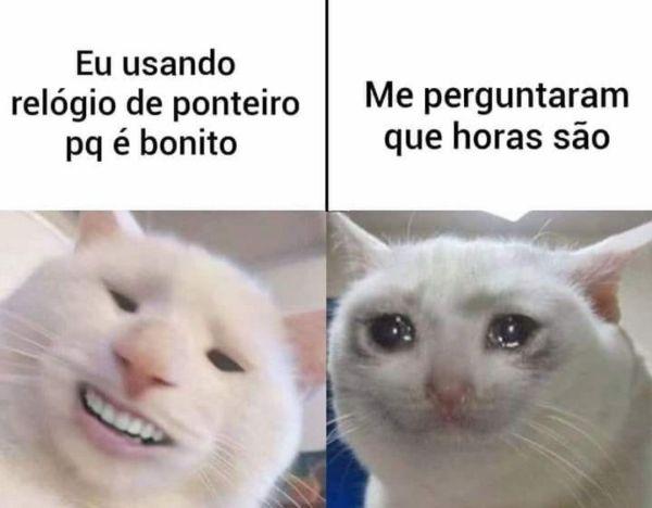 gente meme de gato