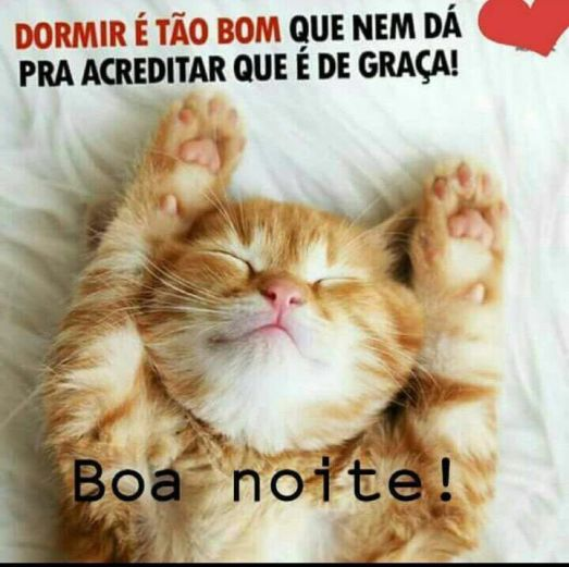 gatinho fofo engraçado para whatsapp