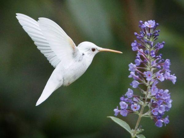 pássaro raro voando