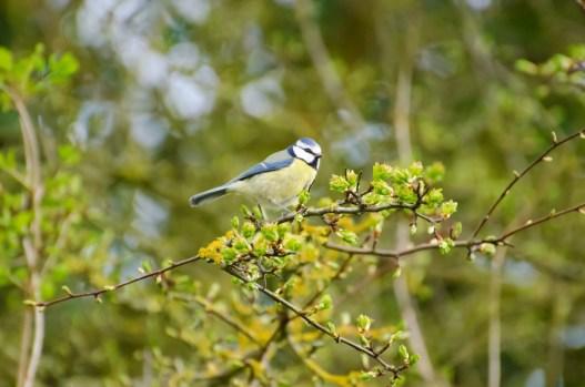 lindo pássaro na árvore