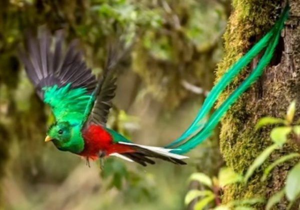 pássaro voando na mata
