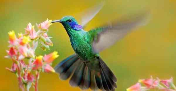espetacular pássaro voando