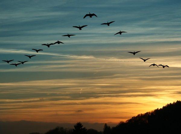 pássaros voando fim de tarde