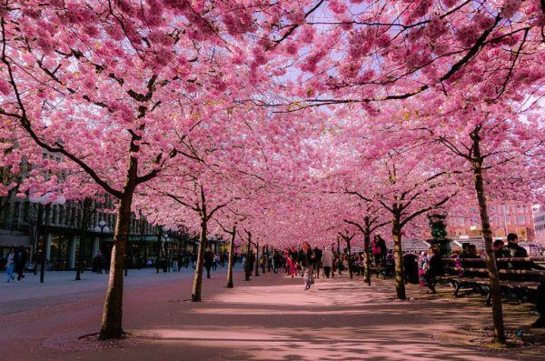 Imagem de primavera perfeita.
