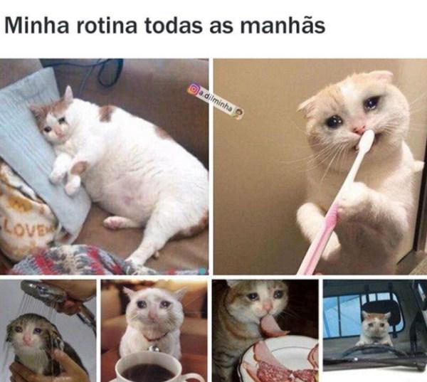 rotina de meme de gato