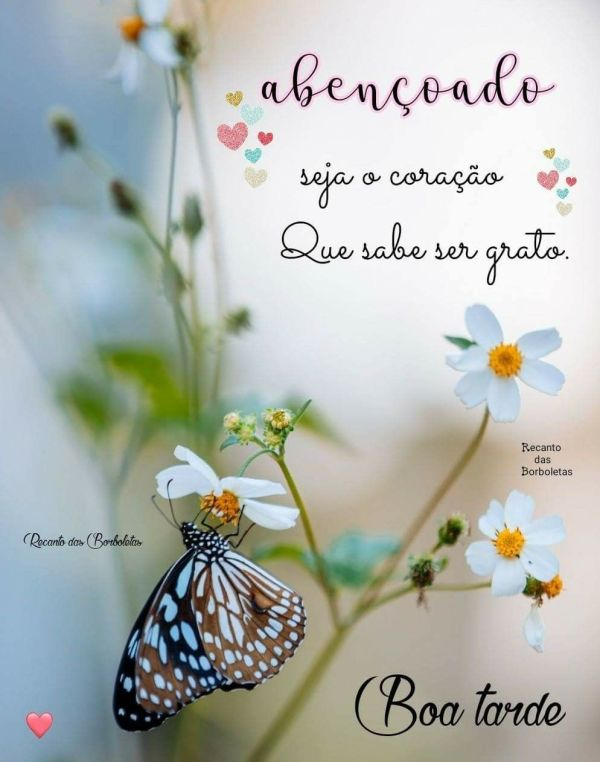 voa borboleta. flores do boa tarde