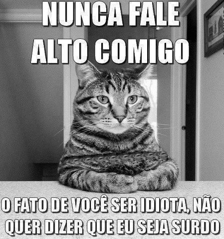 frase engraçada com gato