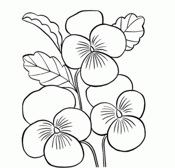 desenho de flores orquidia