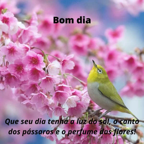 Mensagens de bom dia com pássaros