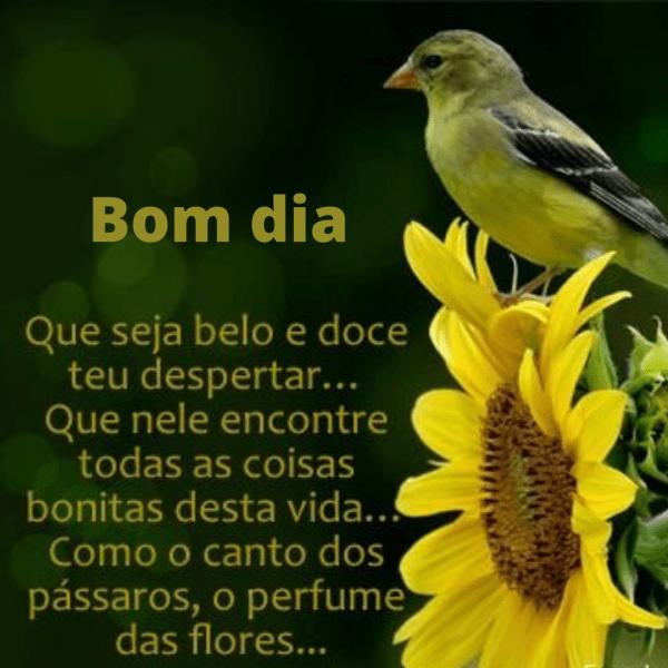 Bom dia com pássaros