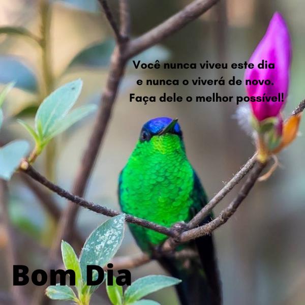 Imagens de bom dia com flores e pássaros