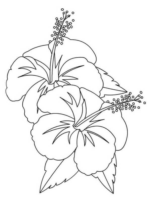 top desenho de flores