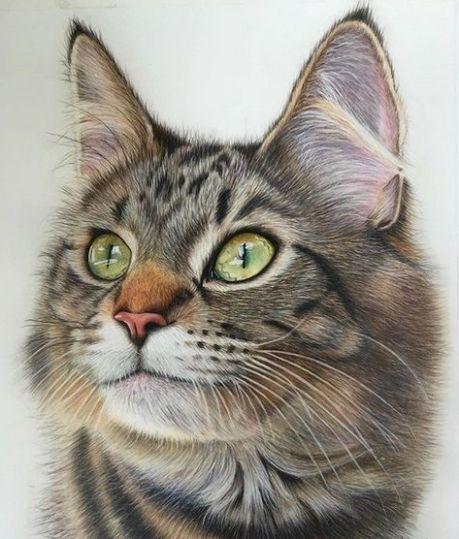 Imagem de desenho gato