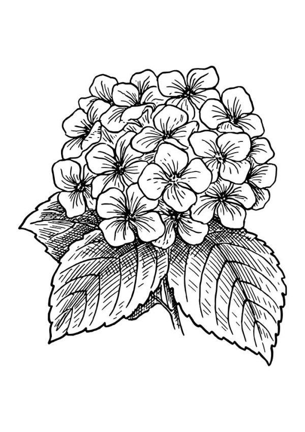 desenho de buquê de flores