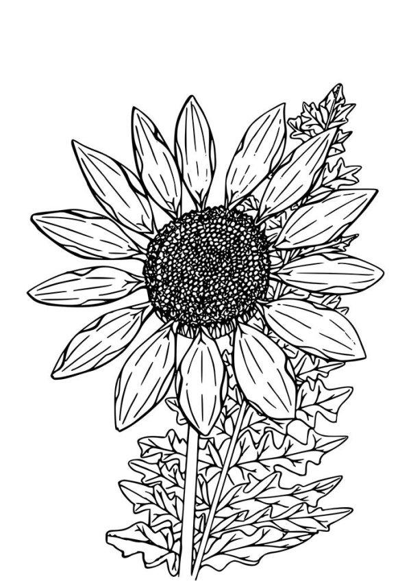 desenho de flores bonitas
