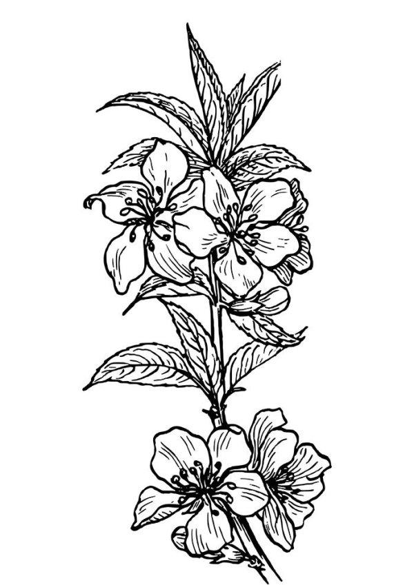 maravilhosos desenho de flores