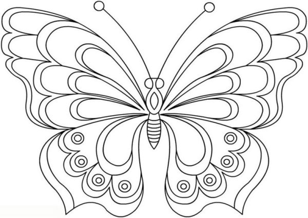 Baixar borboletas