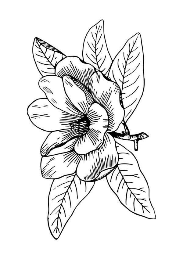 desenho de  flores espetacular