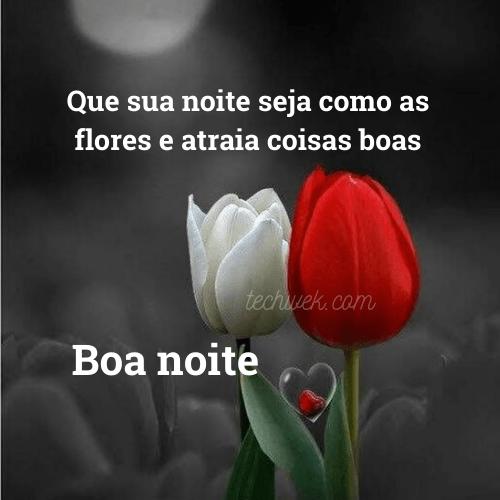 flores de boa noite com carinho