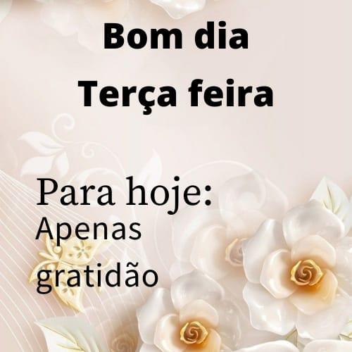 Imagem com flor e mensagem de bom dia e feliz terça feira com gratidão