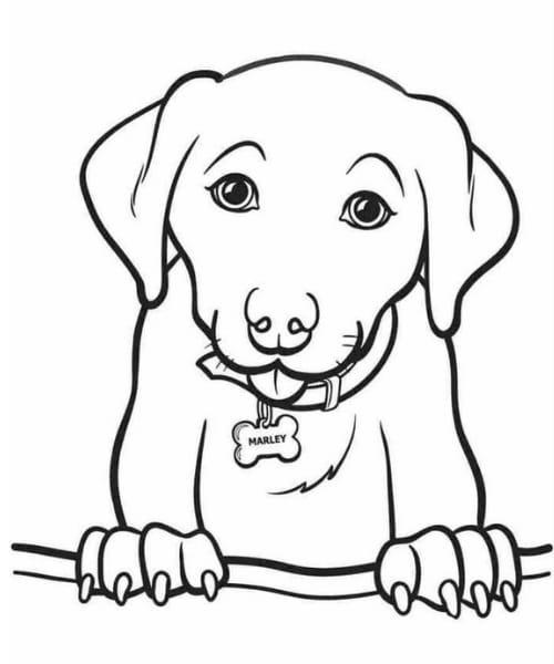 Imagem fofa de cachorro para as crianças colorir