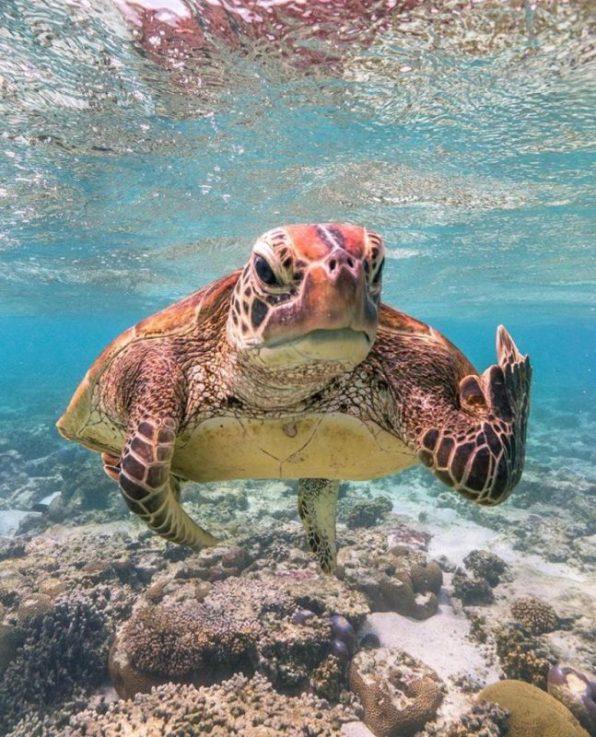 Fotos engraçadas de Animais estressado