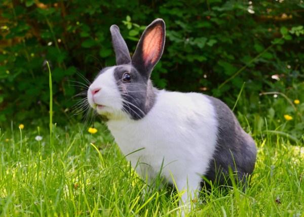 Lista de nomes para coelhos