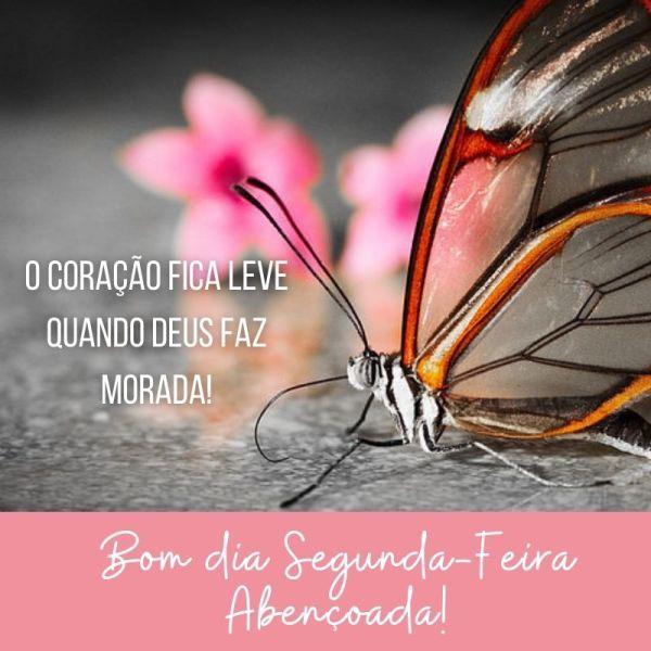 bom dia segunda com linda borboleta