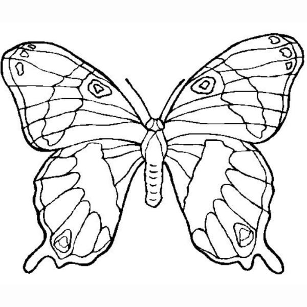 Desenho para colorir a borboleta