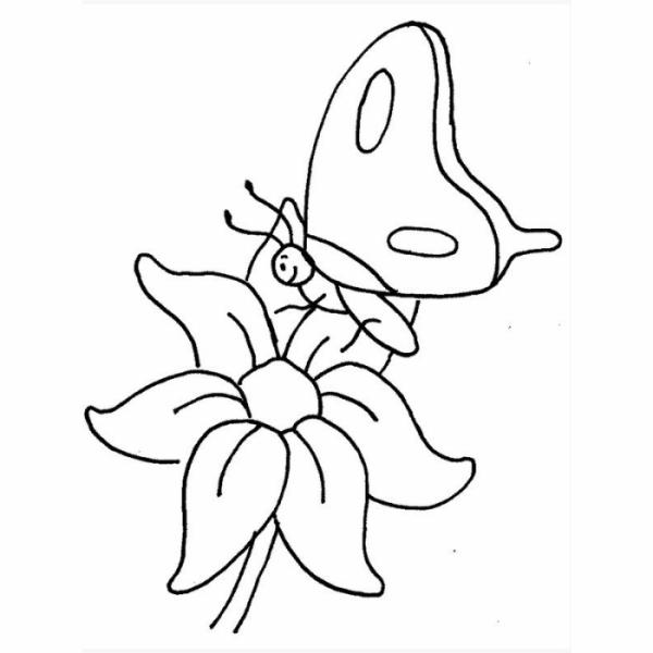 Desenho de flor e borboleta para pintar