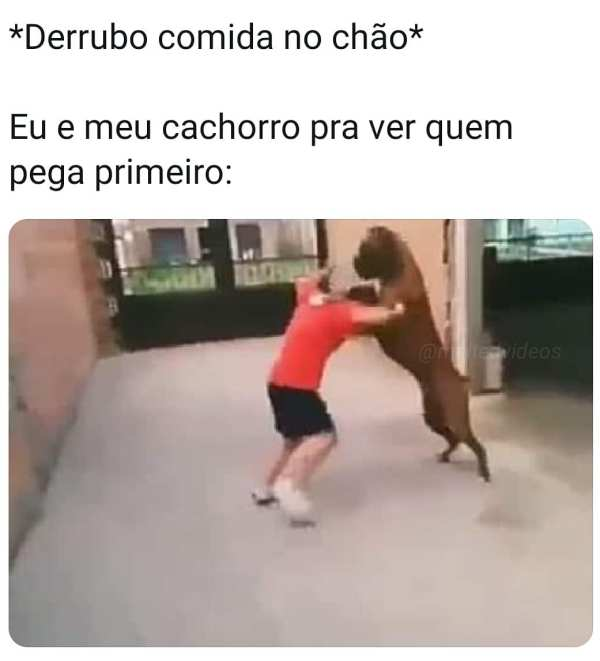 lutando com cachorro