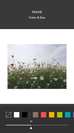 Post Vertical Photos on Instagram- Whiteagram