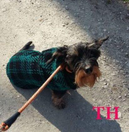 Abrigo DIY para mascota en invierno