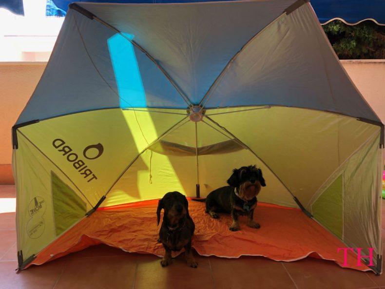 Cómo llevar a tu perro a la playa: equipamiento y consejos post playa