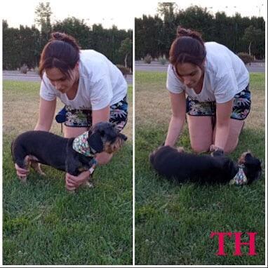 Como enseñar a tu perro a tumbarse